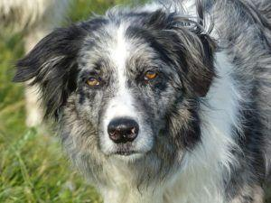 What Does Low White Blood Cell Count Mean In Dogs?