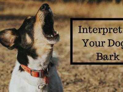 Interpreting Your Dog's Bark