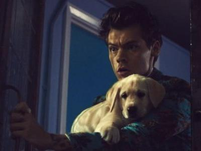 Who Brings Puppies To A Food Fight? Harry Styles, Of Course