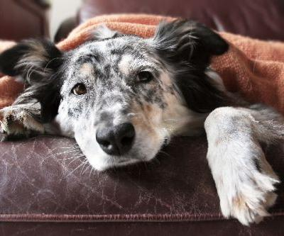 How to Prevent Bloat in Dogs