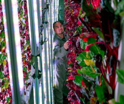 Can Vertical Farms Reap Their Harvest? It's Anyone's Bet