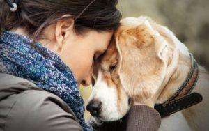 Hospice Care For Dogs: Is It The Right Choice For You & Your Pooch?