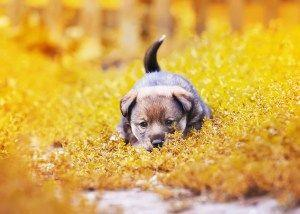 Why Do Dogs Wag Their Tails? & Other Dog Facts You Got Wrong