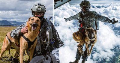 Skydiving dog is the level of chill we aspire to be