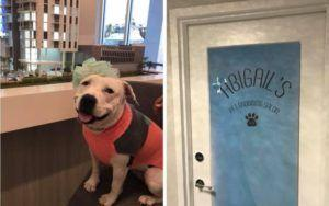 Famous Former Bait Dog Inspires New Grooming Salon