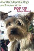 Adorable Adoptable Dogs and Rescues at the Pop Up Adopt Shop