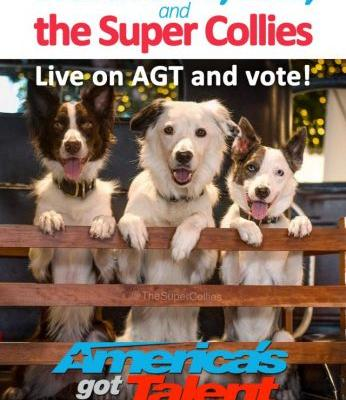 Exclusive behind the scenes video with adorable puppy Loki from AGT