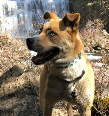 Dog-Friendly Hikes: Northern California