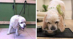 Rescue Helps Abandoned 20-Year-Old Dog Heal His Heart