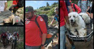 Dogs Who Collapsed From Exhaustion On Hot Hikes Rescued