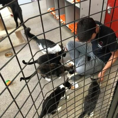 It's dinner time at Cat Depot and Chelsea, one of our