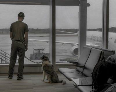9 Tips for Flying with a Pet