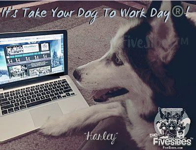 Are You Taking Your Dog To Work Today?