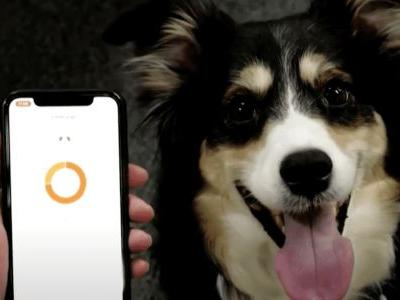 Special Dog Collar Lets Dogs Communicate With Humans
