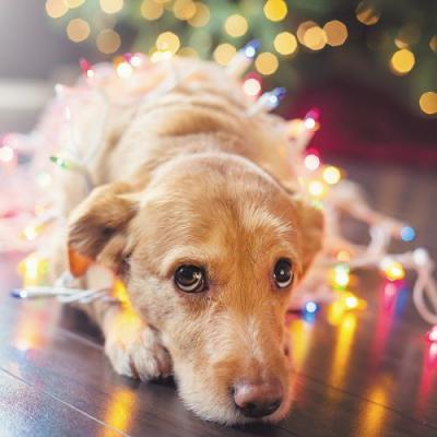 Help! My Dog Ate Christmas