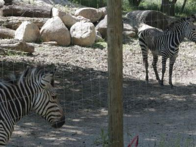 Des Moines Museums and Zoo Create Plans to Reopen for Visitors