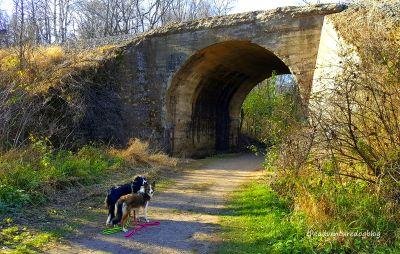 The Adventure Dogs Visit William O'Brien State Park
