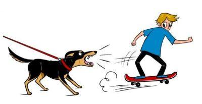 Save Lives by Learning More About Dog Behavior and by Reporting Roaming Dogs