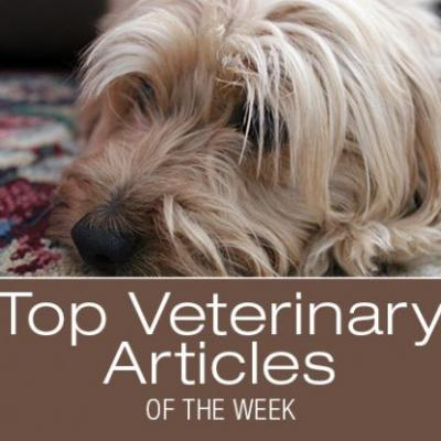 Top Veterinary Articles of the Week: Tremor Syndrome in Dogs, Top 5 Sickest Dog Breeds of 2018, and more
