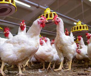 Use of Antibiotics in Indian Poultry Farming Rising Rapidly