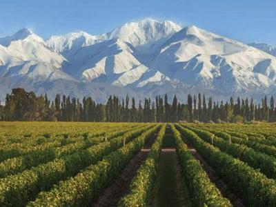 Why You Need to Know About This Legendary Argentinian Wine