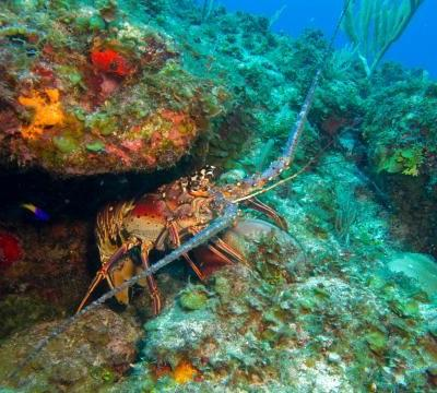Slow Fish Caribe: the EU financed project on sustainable management models in protected areas comes to an end, supporting two Slow Food Presidia and the strengthening of local communities