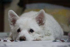 This State Might Be The First To Ban All Puppy Mill Pet Store Sales
