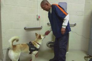 First Live-In Prison Dog Softens The Hearts Of Dangerous Criminals