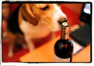 This Theater Brings Dog And Wine Lovers Together in Surprising Way.Cheers!
