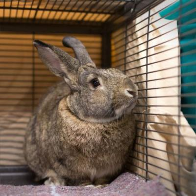 """""""BUNILLA ICE"""" easy house guest - young bunny"""