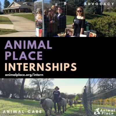 Join the Animal Place team! We are currently accepting