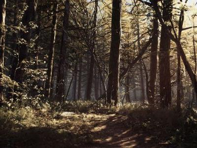New Blair Witch Trailer Offers Tour of the Woods | Game Rant