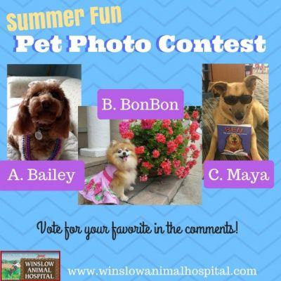 Summer Fun Pet Photo Contest 2017 | Winslow Animal Hospital Dog & Cat