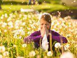 Hay fever survival guide as study reveals risk of a mental illness soars by 66%