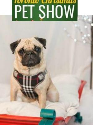 Great Fun and Photos Day 1 at Toronto Christmas Pet Show 2018
