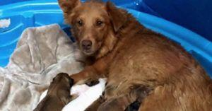 Mother and Newborn Pups Transported Out of Dangerous Shelter Situation All Find Happy Homes