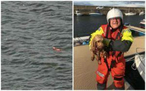 Dog Swept Away During Seaside Stroll Gets A Miraculous Rescue