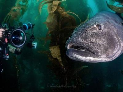 BluewaterU Offers Live Virtual Classes for Underwater Photography