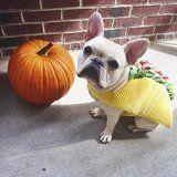 25 Adorable Dogs Dressed Like Tacos