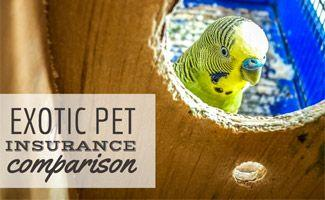 Exotic Pet Insurance Comparison: Get Coverage for Your Pet Today