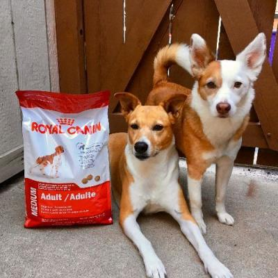 Genetically Targeted Nutrition with Royal Canin