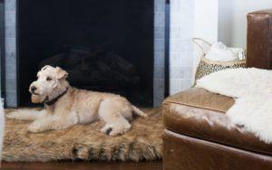 6 Stylish Home Decor Items To Make Life Easier For Senior Dogs