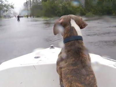 Boat goes through flooded North Carolina streets rescuing pets from homes
