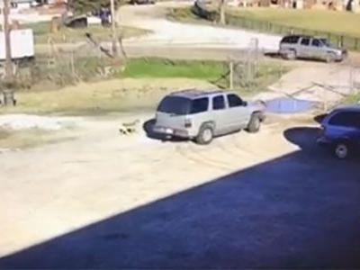 Heartbreaking Video: Dog chases after owner after being dumped at shelter