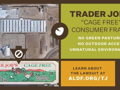 Animal Legal Defense Fund Sues Trader Joe's for Deceptive Egg Carton Labeling