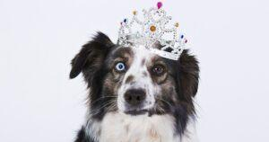 Just Released: The 2020 AKC Most Popular Dog Breeds