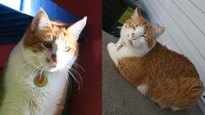 We adopted our cat, Oliver, almost 4 years ago. We found him on