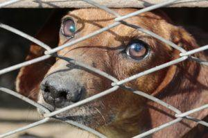 10 Signs A Puppy Is From A Puppy Mill