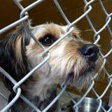 The 1 Thing Most People Forget to Donate to Animal Shelters