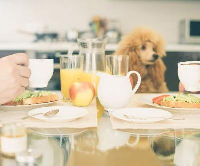 Can Dogs Eat Avocado? What to Know About Avocados and Dogs
